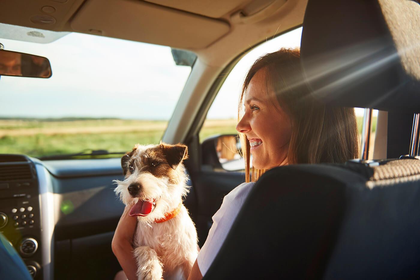 Elephant Auto Insurance Review - Experian